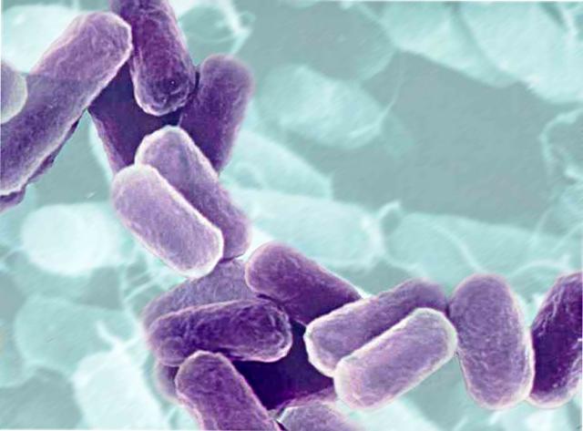 bakterie cumulus