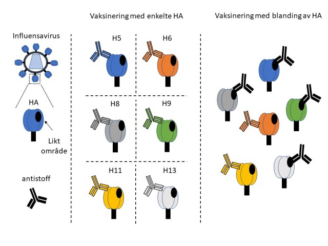 figur influensa forskning