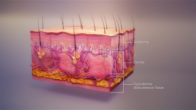 3D_medical_animation_skin_layers